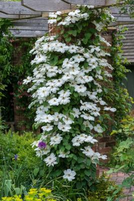 wpid19556-Village-Garden-in-June-GORH052-nicola-stocken.jpg