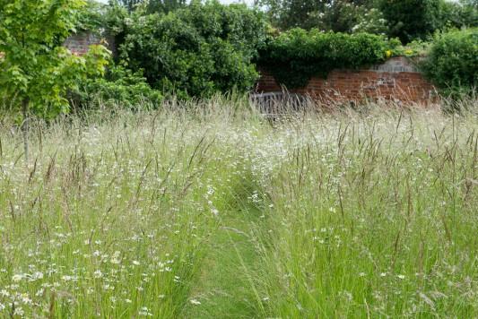wpid19558-Village-Garden-in-June-GORH054-nicola-stocken.jpg