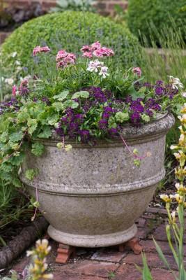 wpid19566-Village-Garden-in-June-GORH058-nicola-stocken.jpg
