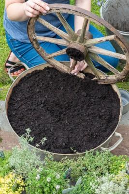 wpid19814-Planting-a-Thyme-Wheel-Step-by-Step-QCON490-nicola-stocken.jpg