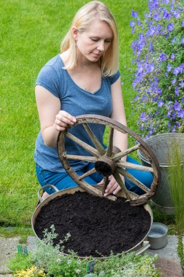 wpid19816-Planting-a-Thyme-Wheel-Step-by-Step-QCON491-nicola-stocken.jpg