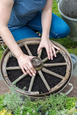 wpid19820-Planting-a-Thyme-Wheel-Step-by-Step-QCON493-nicola-stocken.jpg