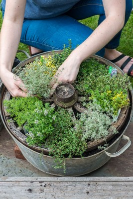 wpid19834-Planting-a-Thyme-Wheel-Step-by-Step-QCON500-nicola-stocken.jpg