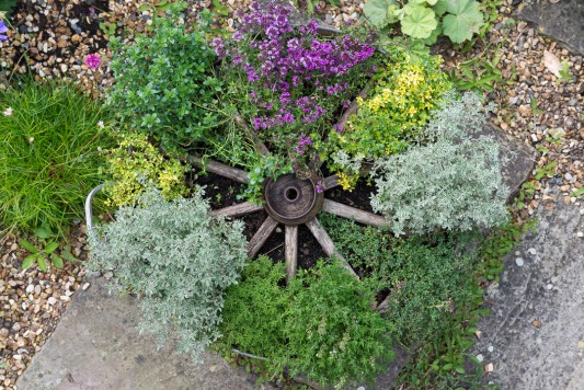 wpid19842-Planting-a-Thyme-Wheel-Step-by-Step-QCON505-nicola-stocken.jpg