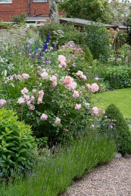 wpid20066-Elaines-Garden-in-July-GELA014-nicola-stocken.jpg
