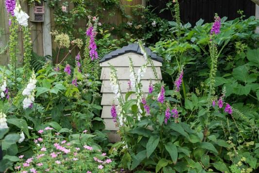 wpid20098-Elaines-Garden-in-July-GELA043-nicola-stocken.jpg