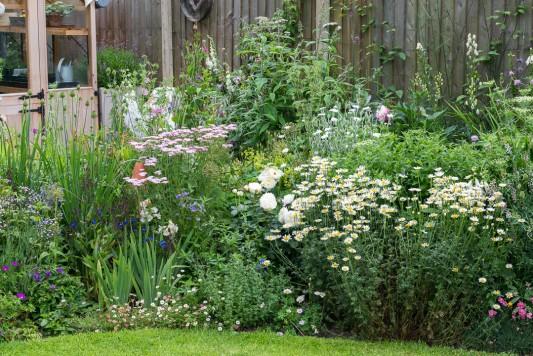 wpid20102-Elaines-Garden-in-July-GELA046-nicola-stocken.jpg