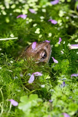 wpid20104-Elaines-Garden-in-July-GELA048-nicola-stocken.jpg