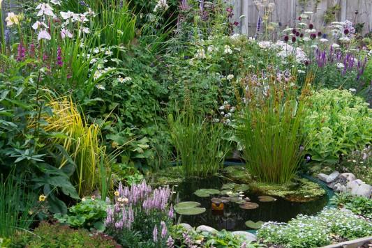 wpid20106-Elaines-Garden-in-July-GELA049-nicola-stocken.jpg
