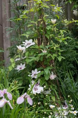 wpid20110-Elaines-Garden-in-July-GELA051-nicola-stocken.jpg