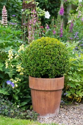 wpid20112-Elaines-Garden-in-July-GELA052-nicola-stocken.jpg