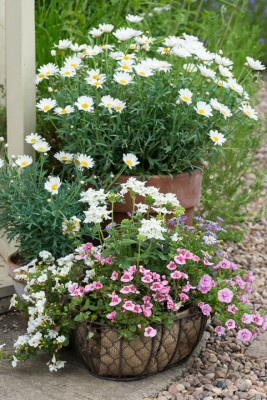 wpid20114-Elaines-Garden-in-July-GELA054-nicola-stocken.jpg