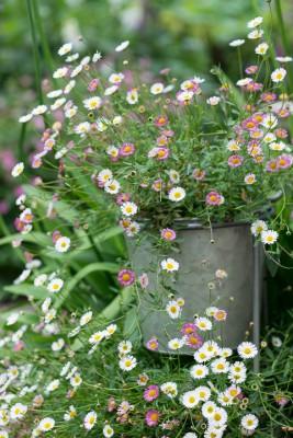 wpid20116-Elaines-Garden-in-July-GELA057-nicola-stocken.jpg