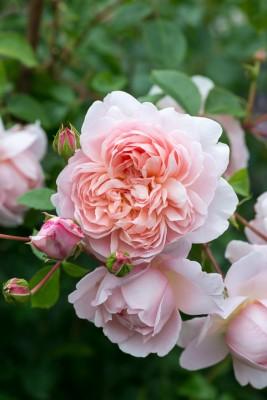 wpid20126-Elaines-Garden-in-July-GELA065-nicola-stocken.jpg