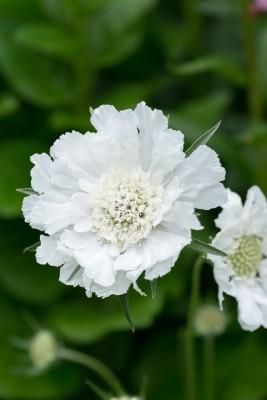 wpid20140-Elaines-Garden-in-July-GELA079-nicola-stocken.jpg