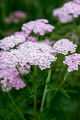 wpid20142-Elaines-Garden-in-July-GELA080-nicola-stocken.jpg