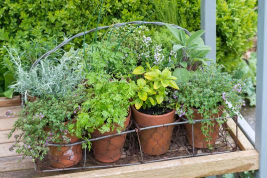 Planting-Herb-Basket-QCON675-nicola-stocken.jpg