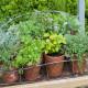Planting-Herb-Basket-QCON675-nicola-stocken.jpg thumbnail