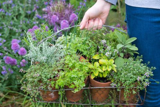 Planting-Herb-Basket-QCON676-nicola-stocken.jpg
