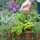 Planting-Herb-Basket-QCON676-nicola-stocken.jpg thumbnail