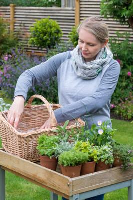 Planting-Herb-Basket-QCON677-nicola-stocken.jpg