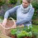 Planting-Herb-Basket-QCON677-nicola-stocken.jpg thumbnail