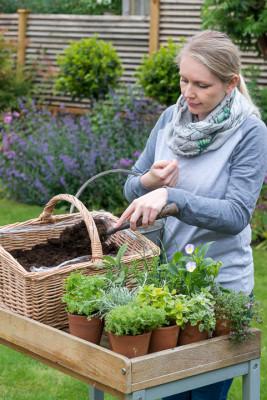 Planting-Herb-Basket-QCON678-nicola-stocken.jpg