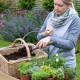 Planting-Herb-Basket-QCON678-nicola-stocken.jpg thumbnail