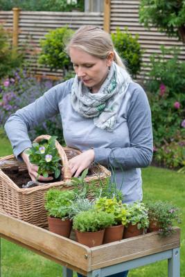 Planting-Herb-Basket-QCON679-nicola-stocken.jpg