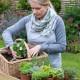 Planting-Herb-Basket-QCON679-nicola-stocken.jpg thumbnail
