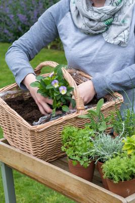 Planting-Herb-Basket-QCON680-nicola-stocken.jpg