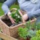 Planting-Herb-Basket-QCON680-nicola-stocken.jpg thumbnail