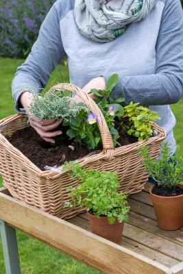Planting-Herb-Basket-QCON681-nicola-stocken.jpg