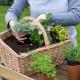 Planting-Herb-Basket-QCON681-nicola-stocken.jpg thumbnail