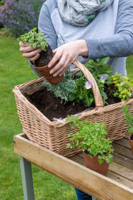 Planting-Herb-Basket-QCON682-nicola-stocken.jpg