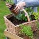 Planting-Herb-Basket-QCON682-nicola-stocken.jpg thumbnail
