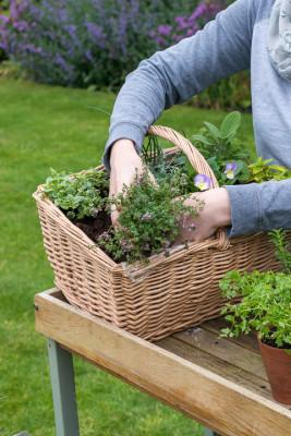 Planting-Herb-Basket-QCON683-nicola-stocken.jpg