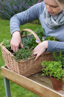 Planting-Herb-Basket-QCON684-nicola-stocken.jpg