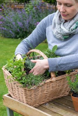 Planting-Herb-Basket-QCON685-nicola-stocken.jpg