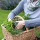 Planting-Herb-Basket-QCON685-nicola-stocken.jpg thumbnail