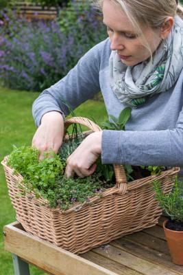 Planting-Herb-Basket-QCON686-nicola-stocken.jpg