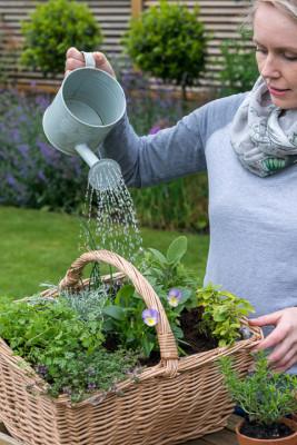 Planting-Herb-Basket-QCON687-nicola-stocken.jpg