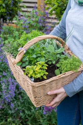 Planting-Herb-Basket-QCON688-nicola-stocken.jpg
