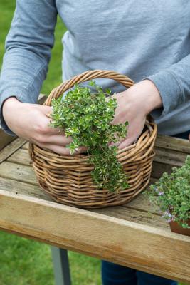 Planting-Herb-Basket-QCON690-nicola-stocken.jpg