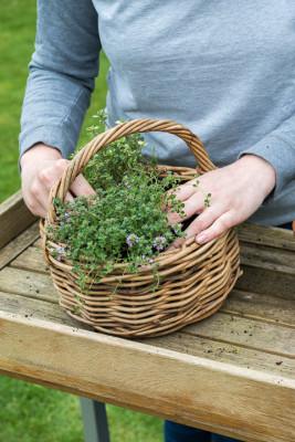Planting-Herb-Basket-QCON691-nicola-stocken.jpg