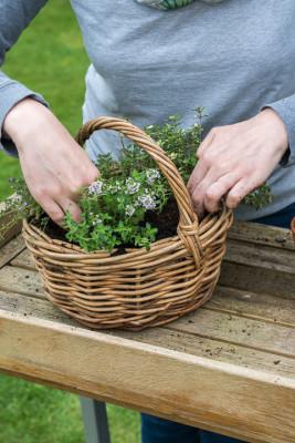 Planting-Herb-Basket-QCON692-nicola-stocken.jpg