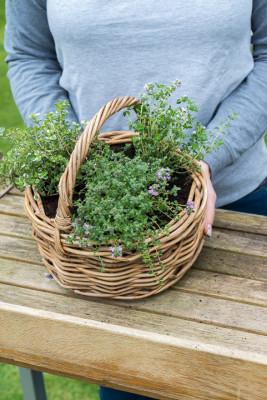 Planting-Herb-Basket-QCON693-nicola-stocken.jpg