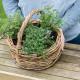 Planting-Herb-Basket-QCON693-nicola-stocken.jpg thumbnail