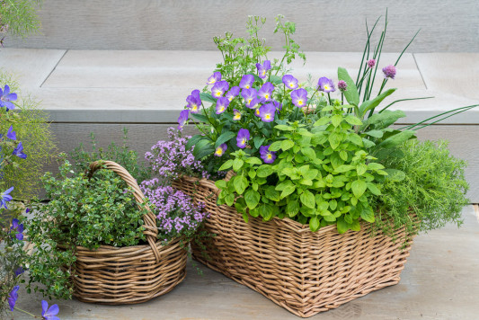 Planting-Herb-Basket-QCON694-nicola-stocken.jpg
