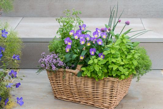 Planting-Herb-Basket-QCON695-nicola-stocken.jpg